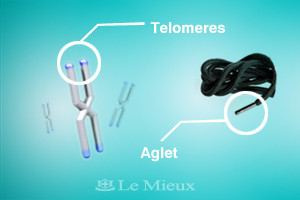 New You e-newsletter telomere